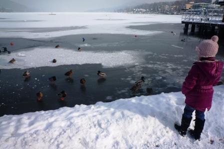 Enten im winterlichen Wörthersee