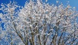Winterkristalle